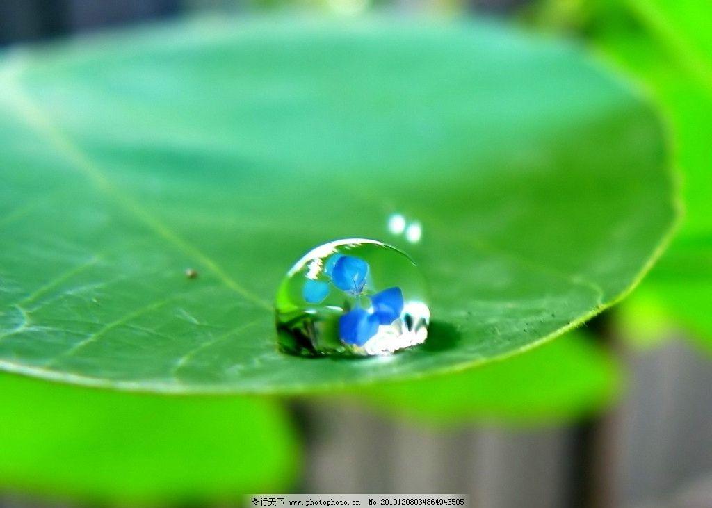 天然露珠 绿叶 晨露 自然风景 自然景观 摄影 72dpi jpg
