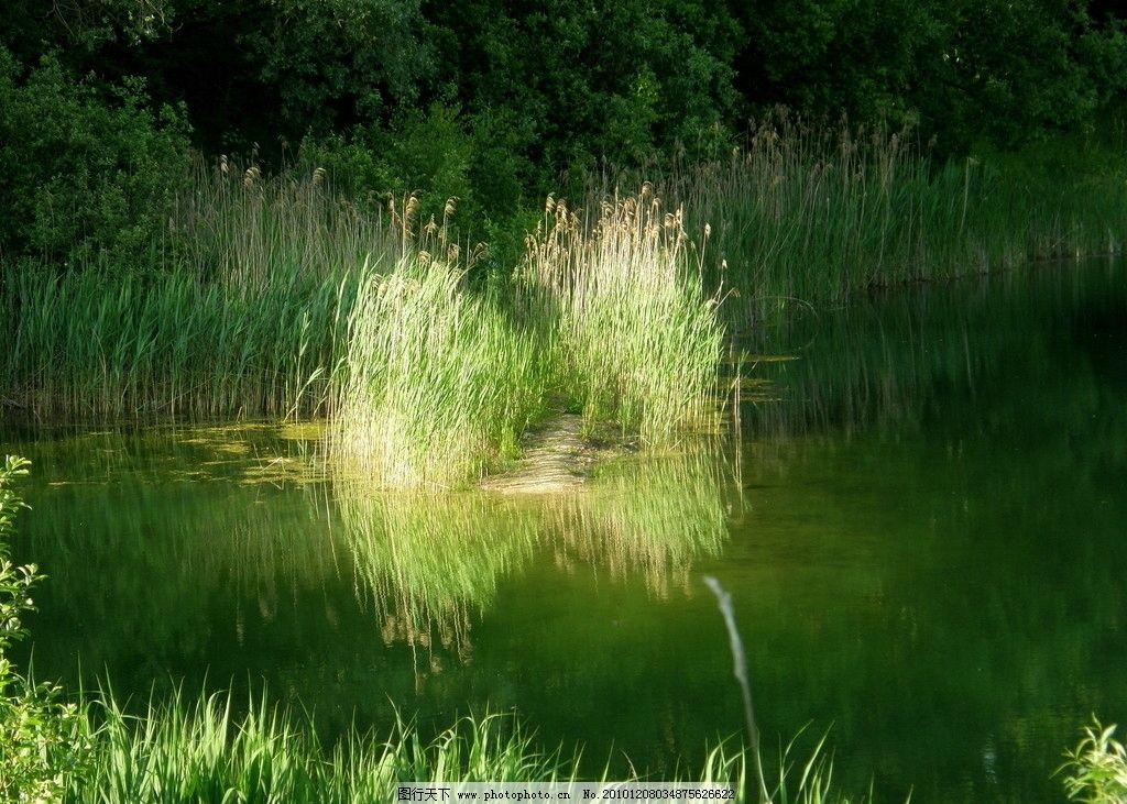 水边植物景观手绘