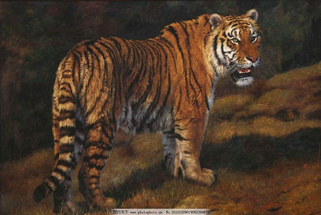 油画虎 虎 动物油画 写实油画