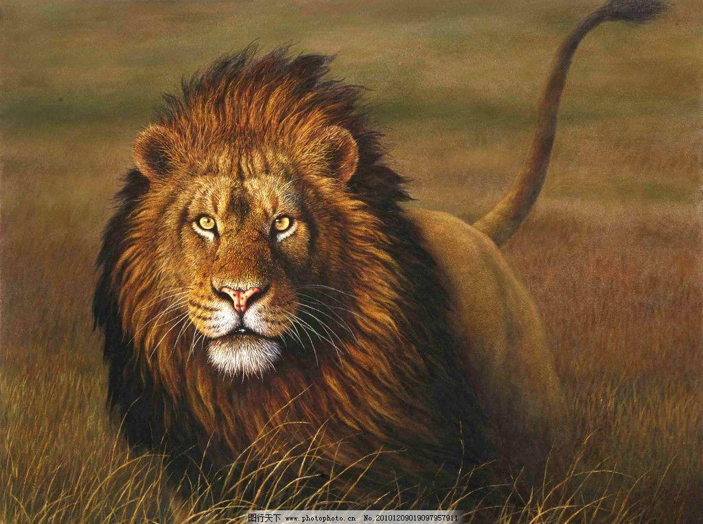 雄狮 兽中之王 动物油画 绘画 艺术 油画作品 油画创作 油画写生