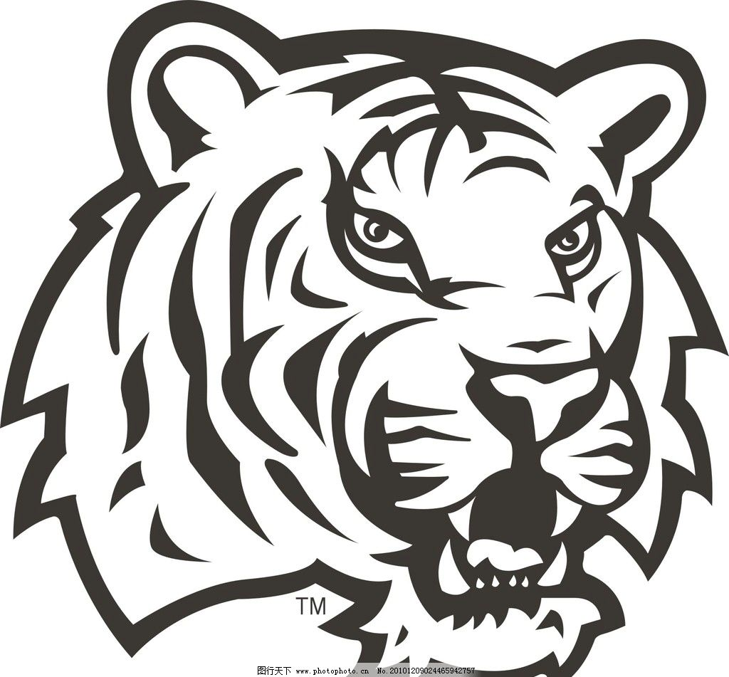 老虎 虎头 野生动物 生物世界