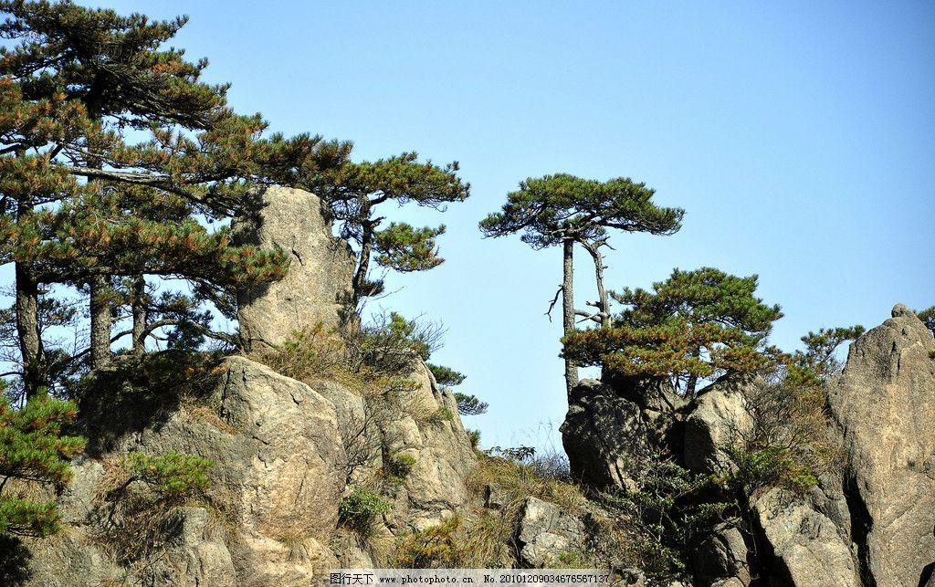 黄山奇石 黄山风景 松树 石头 阳光 蓝天 树木 山水风景 天下第一奇山