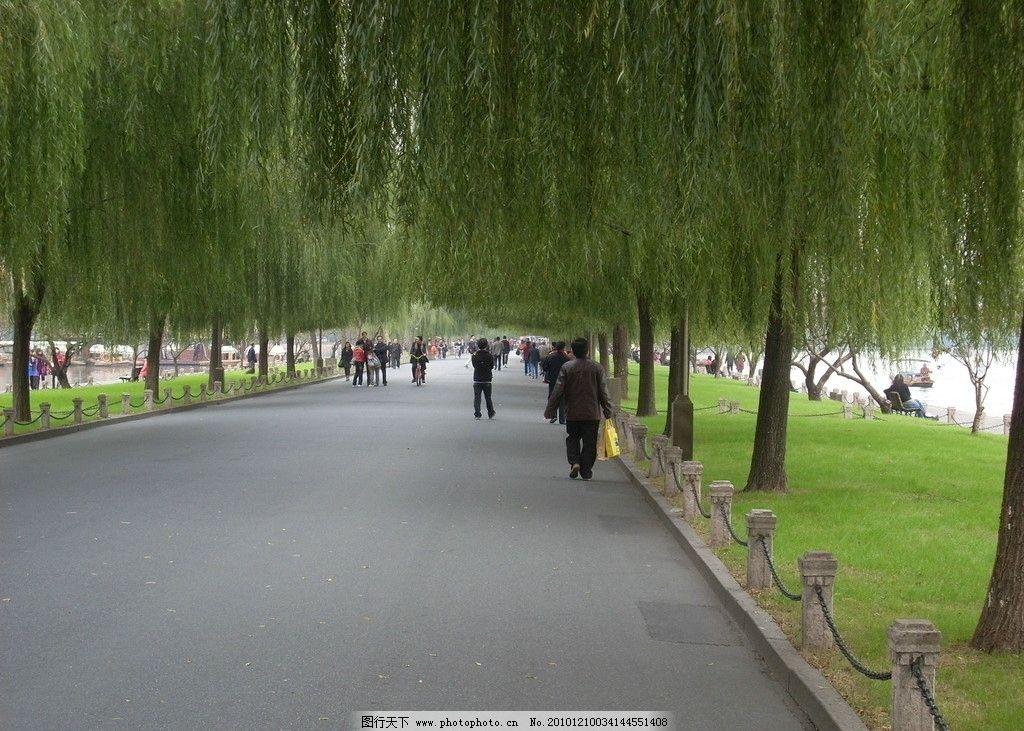 自然景观 自然风景 绿荫 垂柳 马路 道路 游人 旅游摄影 摄影 96dpi
