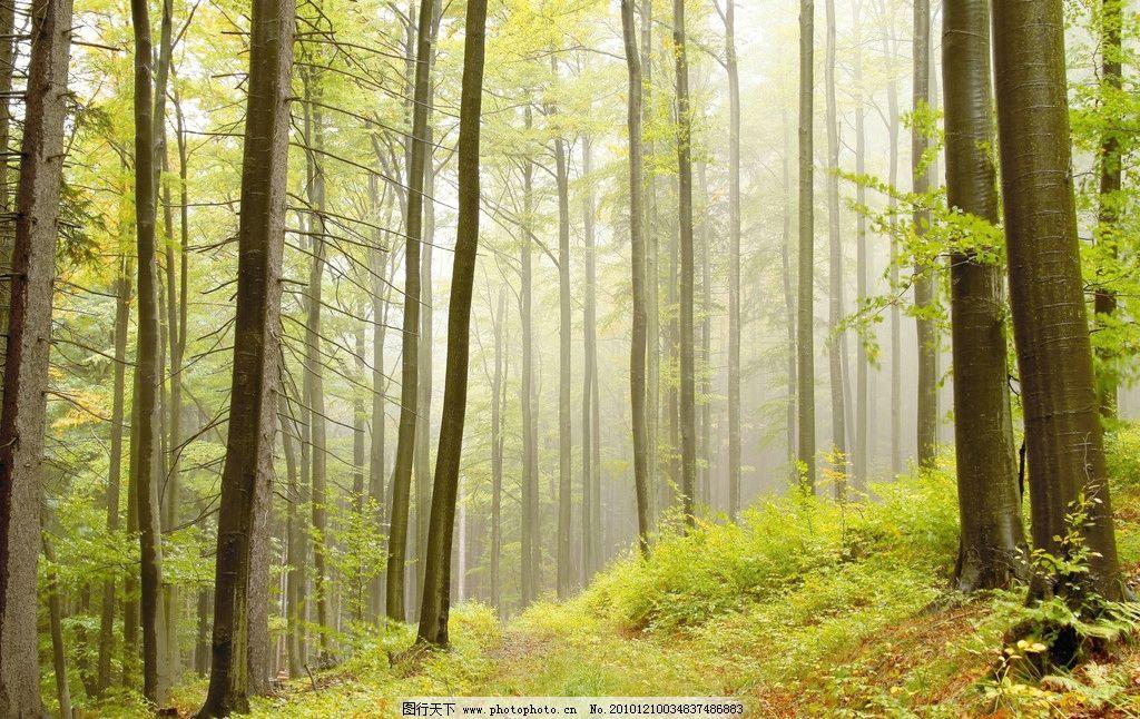 自然景观 自然风景  自然风景 自然风光 树林 树木 阳光 光线 小草