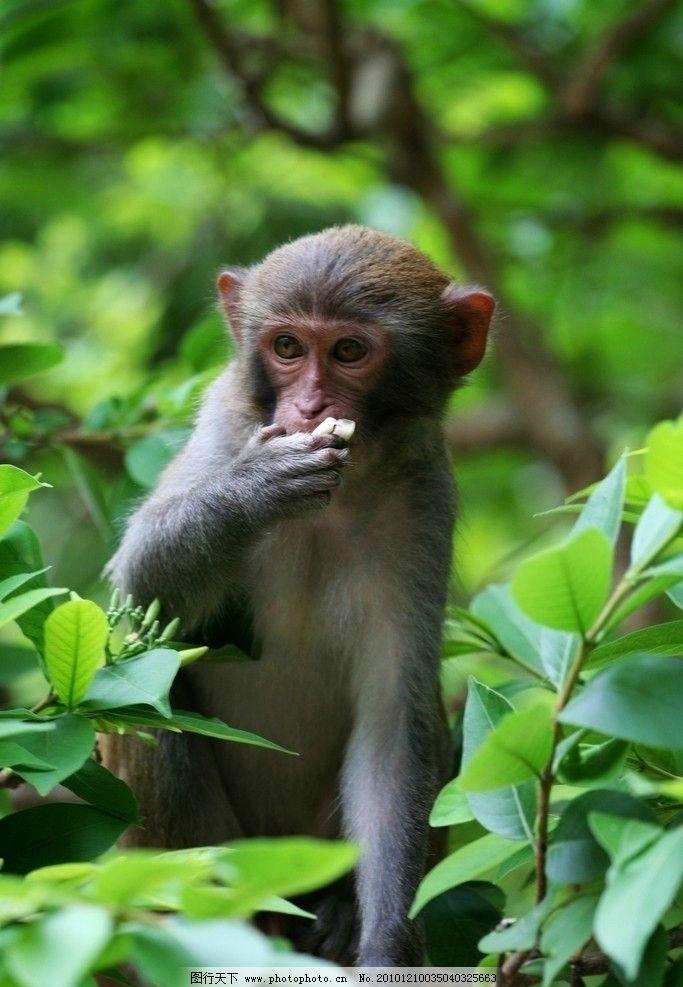 三亚猴岛 猴子 野生动物 生物世界 摄影
