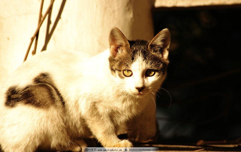 忧郁的猫 阳光 灿烂 可爱 流浪猫 可怜 眼神 忧伤 暗淡 摄影