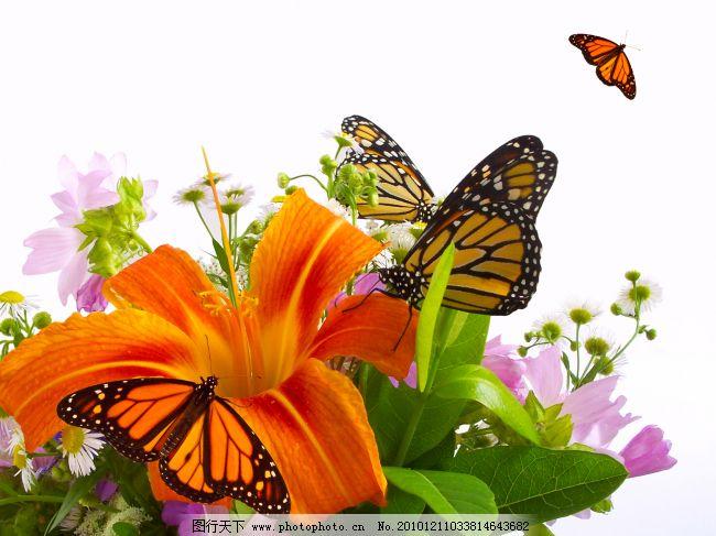 带蝴蝶的白底多彩花束