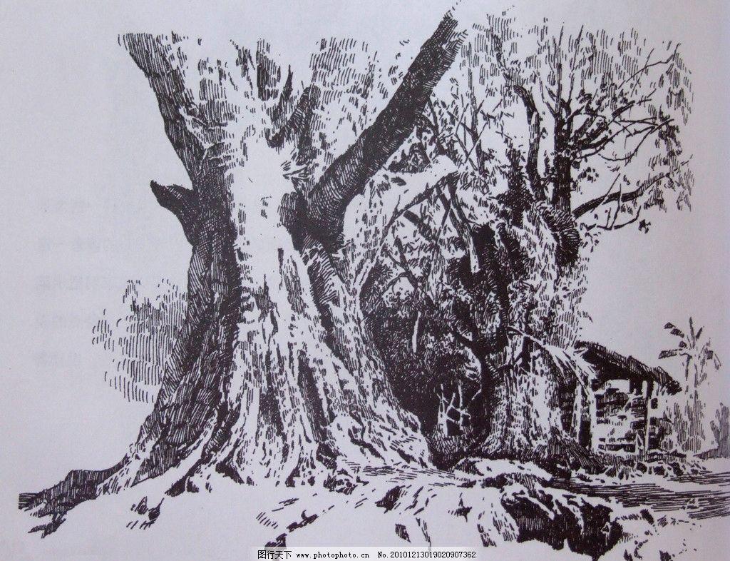 钢笔画图片 大树 钢笔画