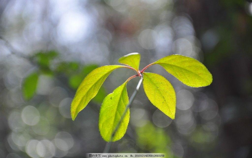 绿叶图片,特写 树叶 植物 高清图片 树木 叶子 摄影