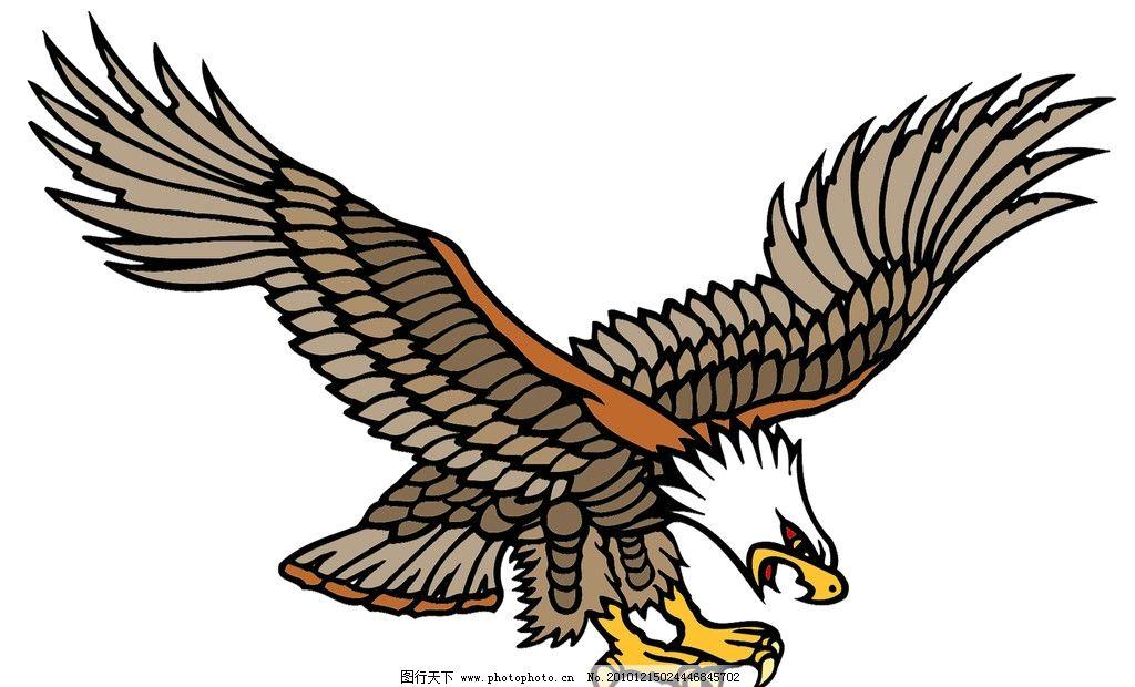 铅笔画3d立体鹰画-飞翔的老鹰素描画