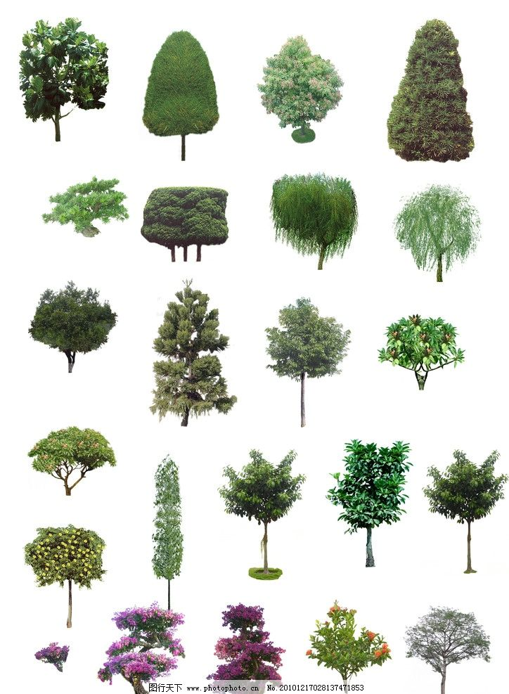 植物素材 景观园林植物素材 景观 植物 树 园林 景观设计 环境设计 源