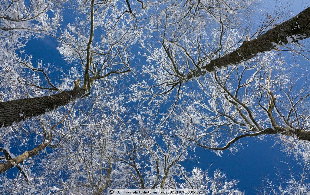 冬天的树图片