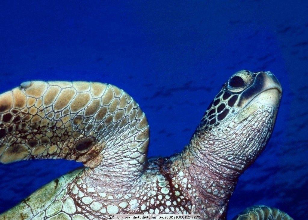 海底世界 海龟 乌龟 海底 生物 生物摄影 海洋生物 生物世界 摄影 72d