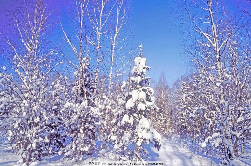 冬季雪景 白雪 积雪 冬天雪景 树枝雪景 冬季风景 冬天风景 自然风景