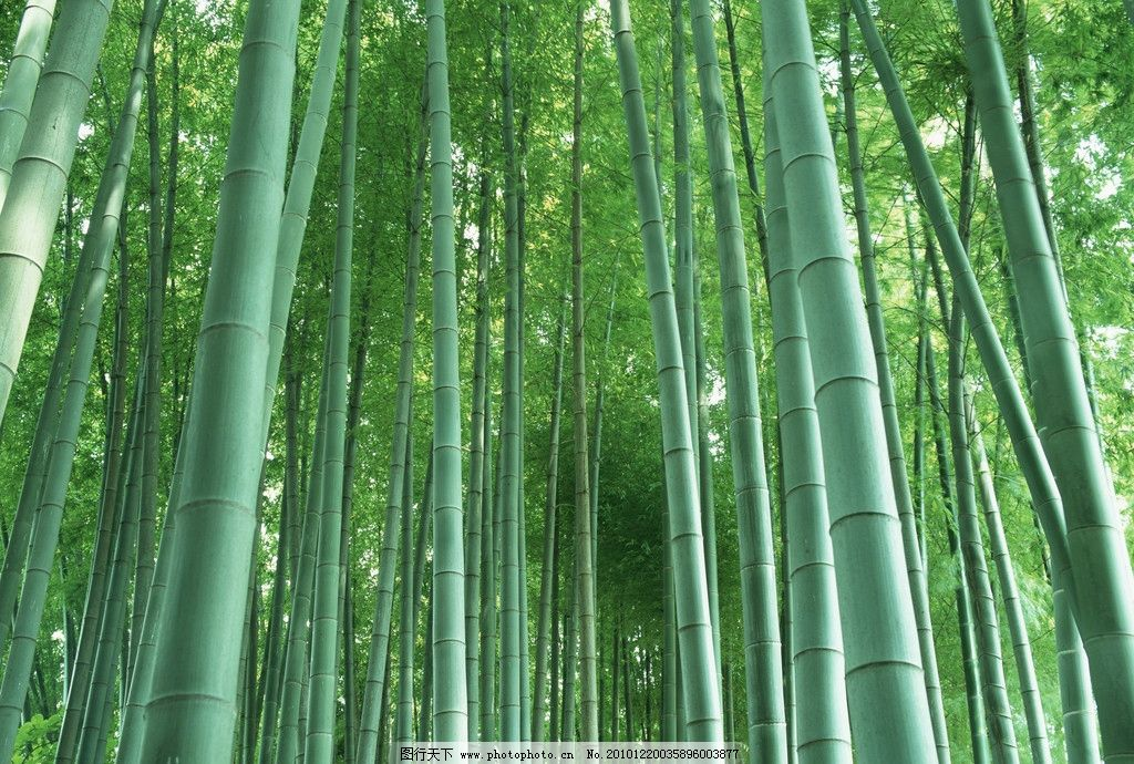 竹子风景图片