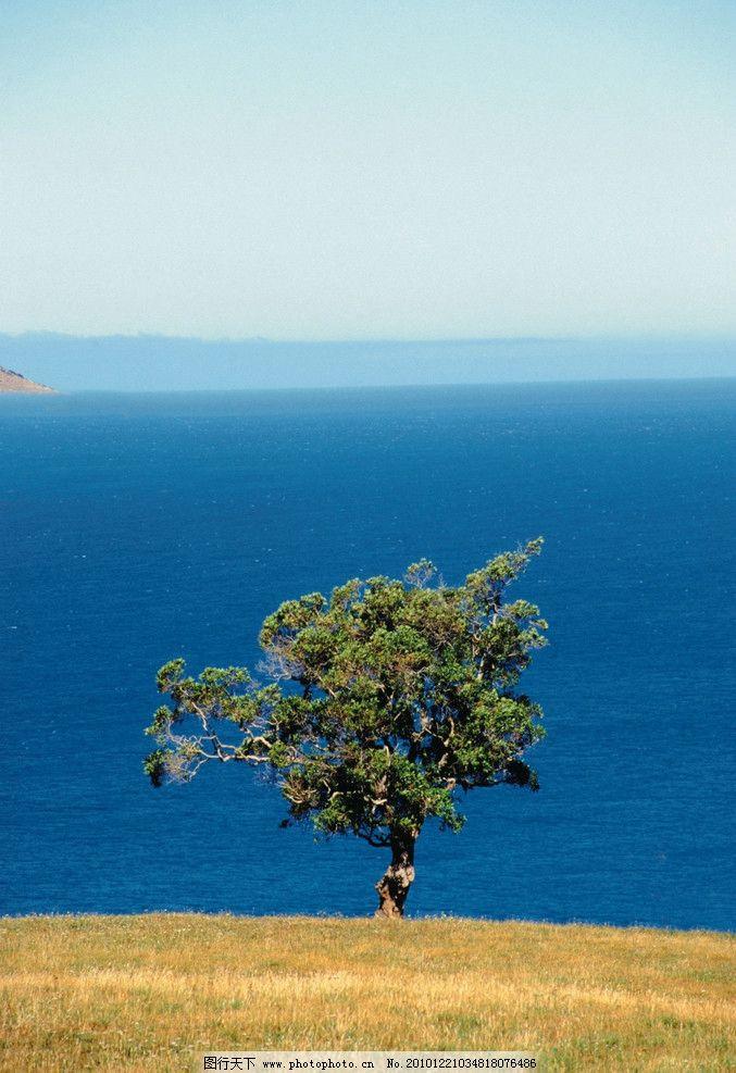 自然风景 小树 大海 草地 海边的树 自然景观 摄影 300dpi jpg
