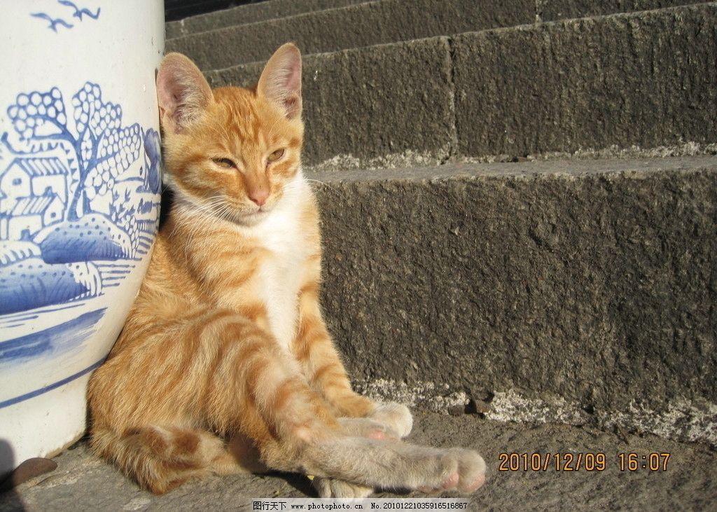 壁纸 动物 狗 狗狗 猫 猫咪 小猫 桌面 1024_731