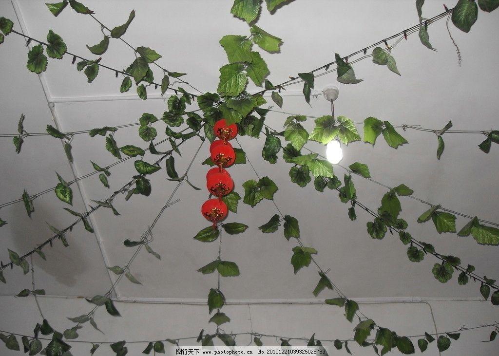 房顶      天花板 绿叶 灯笼 日光灯 电线 室内摄影 建筑园林 摄影 96图片