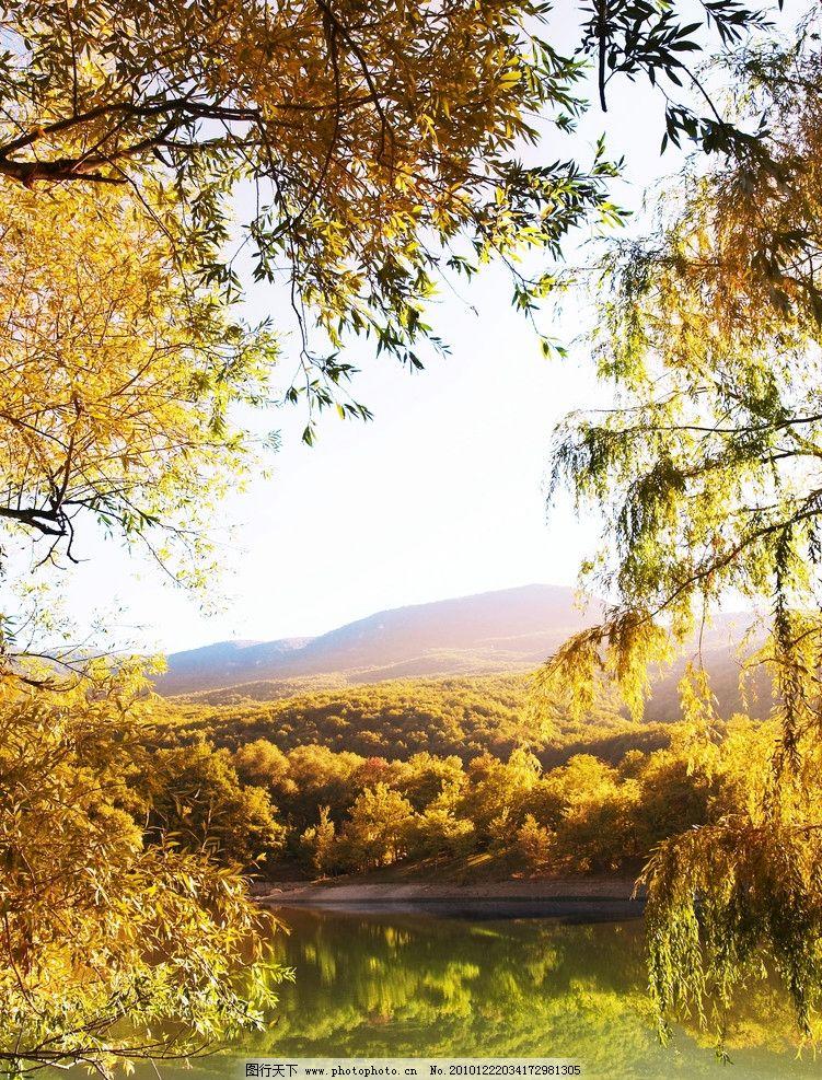 黄叶 树木 湖水 宁静 远山 漂亮 风景 自然 秋天 金秋 大自然