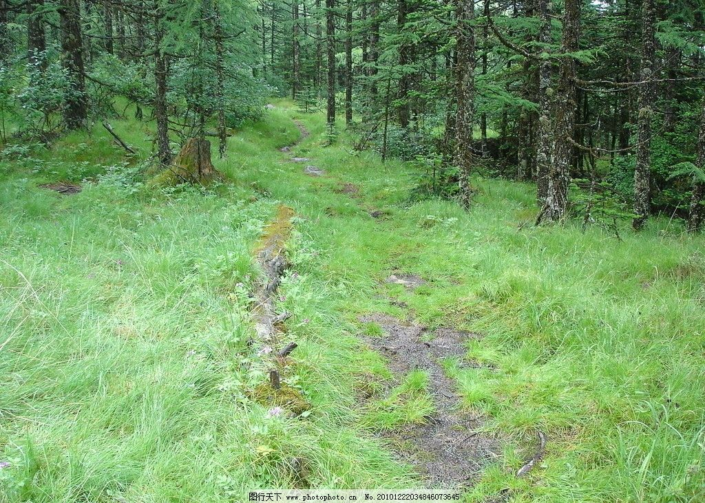原始森林 小路 草地 绿色 自然风景 自然景观 摄影