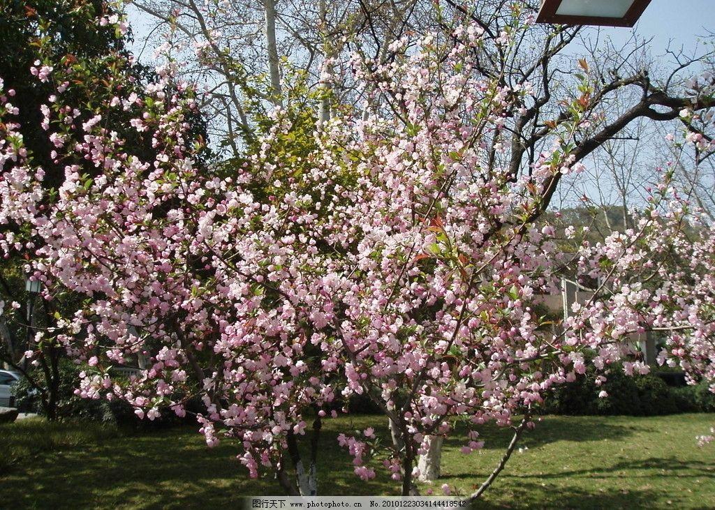 杭州苏堤桃花 西湖 春天 春色 宜人 美景 世界文化遗产 自然风景