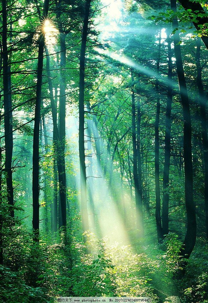 壁纸 风景 森林 桌面 677_987 竖版 竖屏 手机