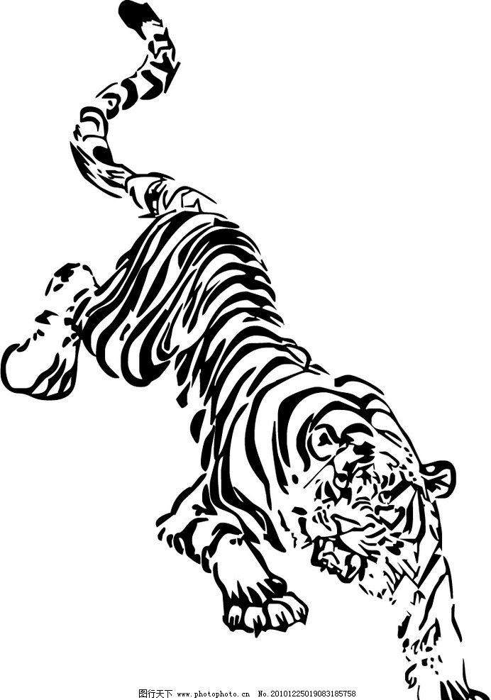 老虎 矢量图图片