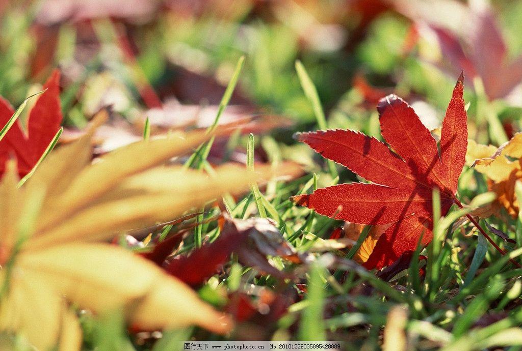 掉落的树叶图片