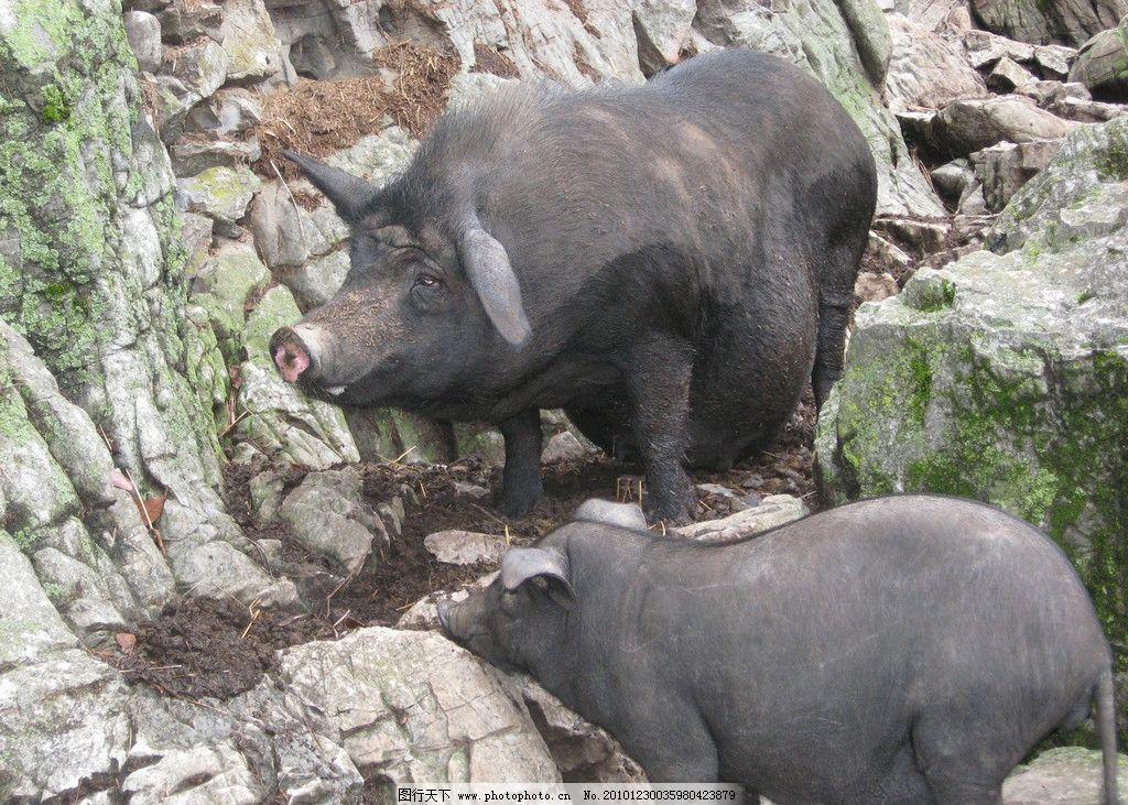 壁纸 犀牛 野生动物 1024_731
