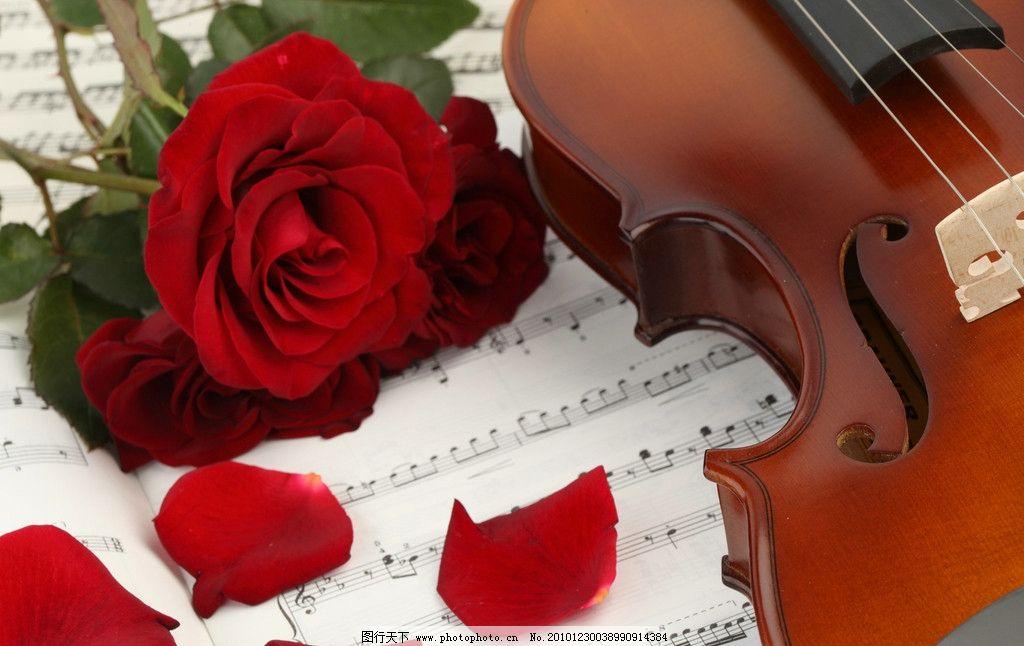 小提琴和玫瑰花图片,乐谱 玫瑰花瓣 音符 小提琴特写