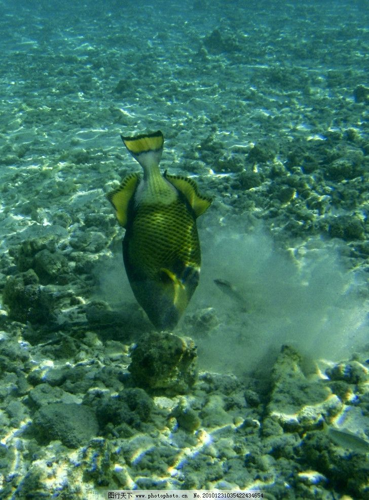 海里的鱼 海洋 鱼 捕食 动物 昆虫 生物世界 摄影 240dpi jpg